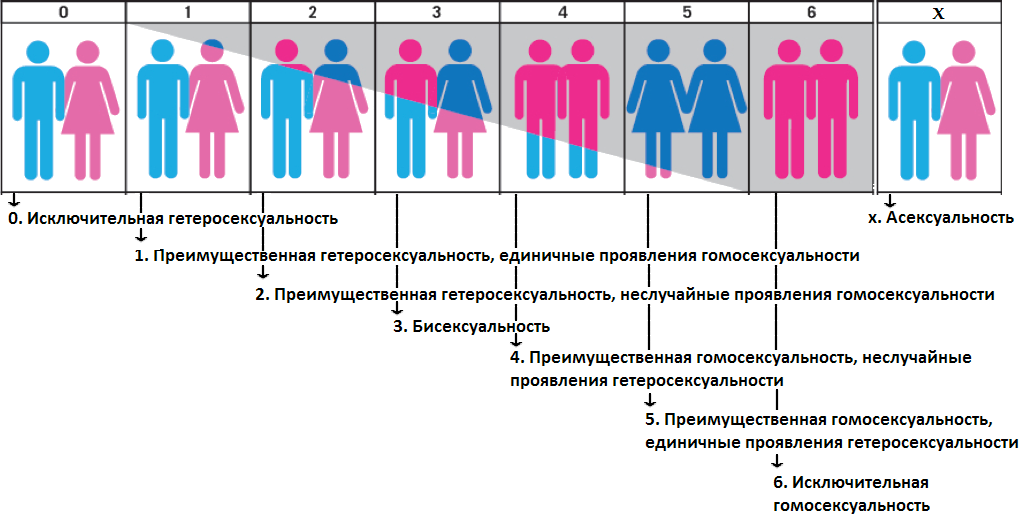 Сколько би сексуалов по статистике